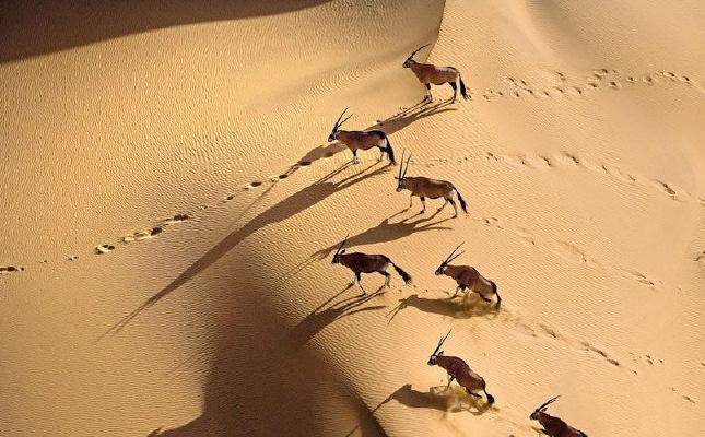 上帝视角下的非洲大陆和野生动物世界