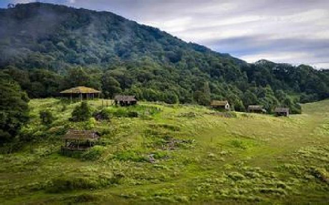 云南森林公安将首次行使林业行政执法权