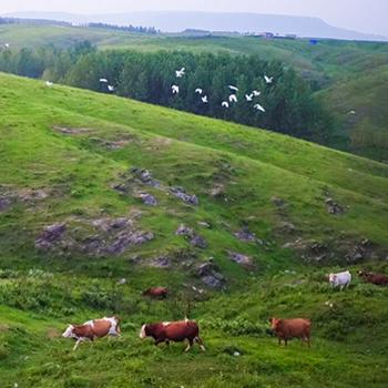 大美安徽:生态优先 绿色发展