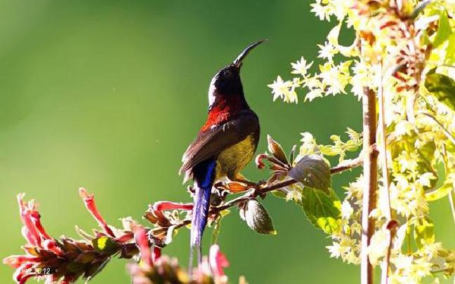 走进云南缤纷的鸟世界 画面太美不敢看