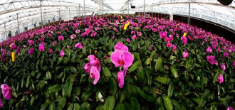 枞阳县的花卉苗木富农家
