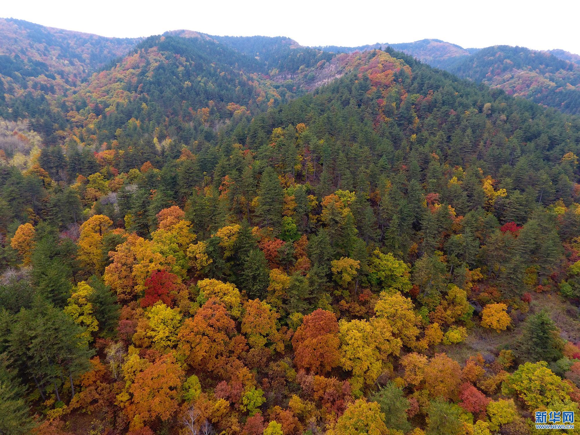 航拍苍儿会,感受色彩斑斓的秋
