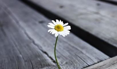【听客】孤独并没什么不好,只是你害怕孤独