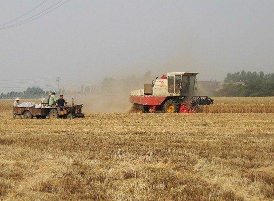 国务院办公厅印发《关于完善支持政策促进农民增收的若干意见》