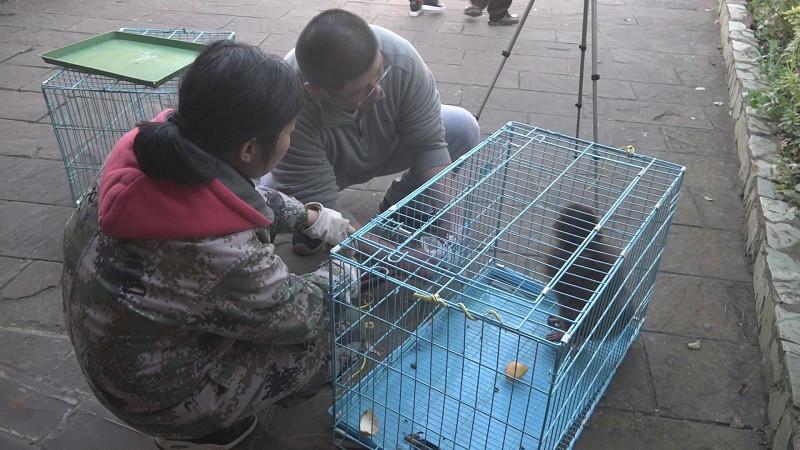 """云南新平县警民合力救助""""断腿""""猕猴"""