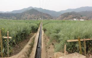 云南省早熟油菜品种示范创四项全国高产记录