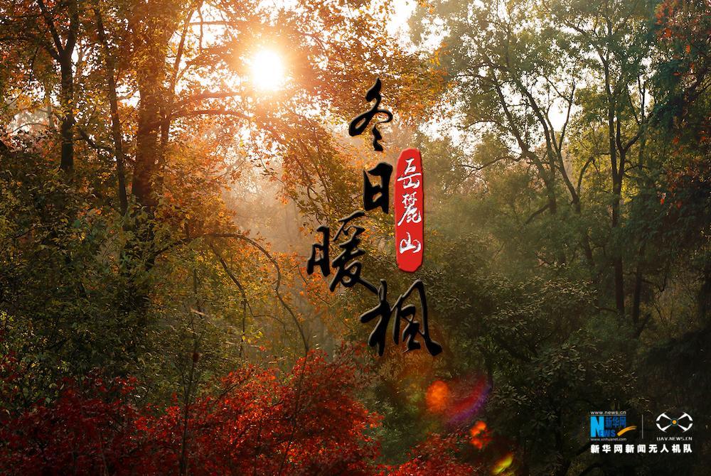 """【""""飞阅""""中国】航拍岳麓山冬日暖枫:杜牧赞""""停车坐爱枫林晚"""" - 人在上海    - 中国映像博物馆"""