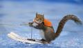 可爱松鼠玩起冲浪