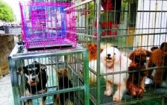 晋中宠物市场整治显成效 还路于民保通畅