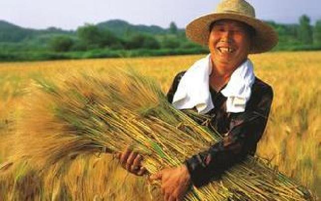 """2016年河南""""三农""""的钱都花哪儿了?"""
