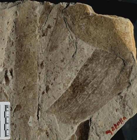 生物进化百科全书 这些神奇的化石你见过吗?
