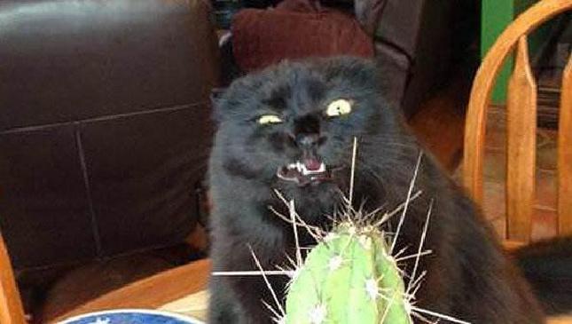 猫咪抓痒 全靠一盆仙人掌