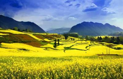 被西安周边的油菜花田惊艳了 这才是四海八荒最美的春天!