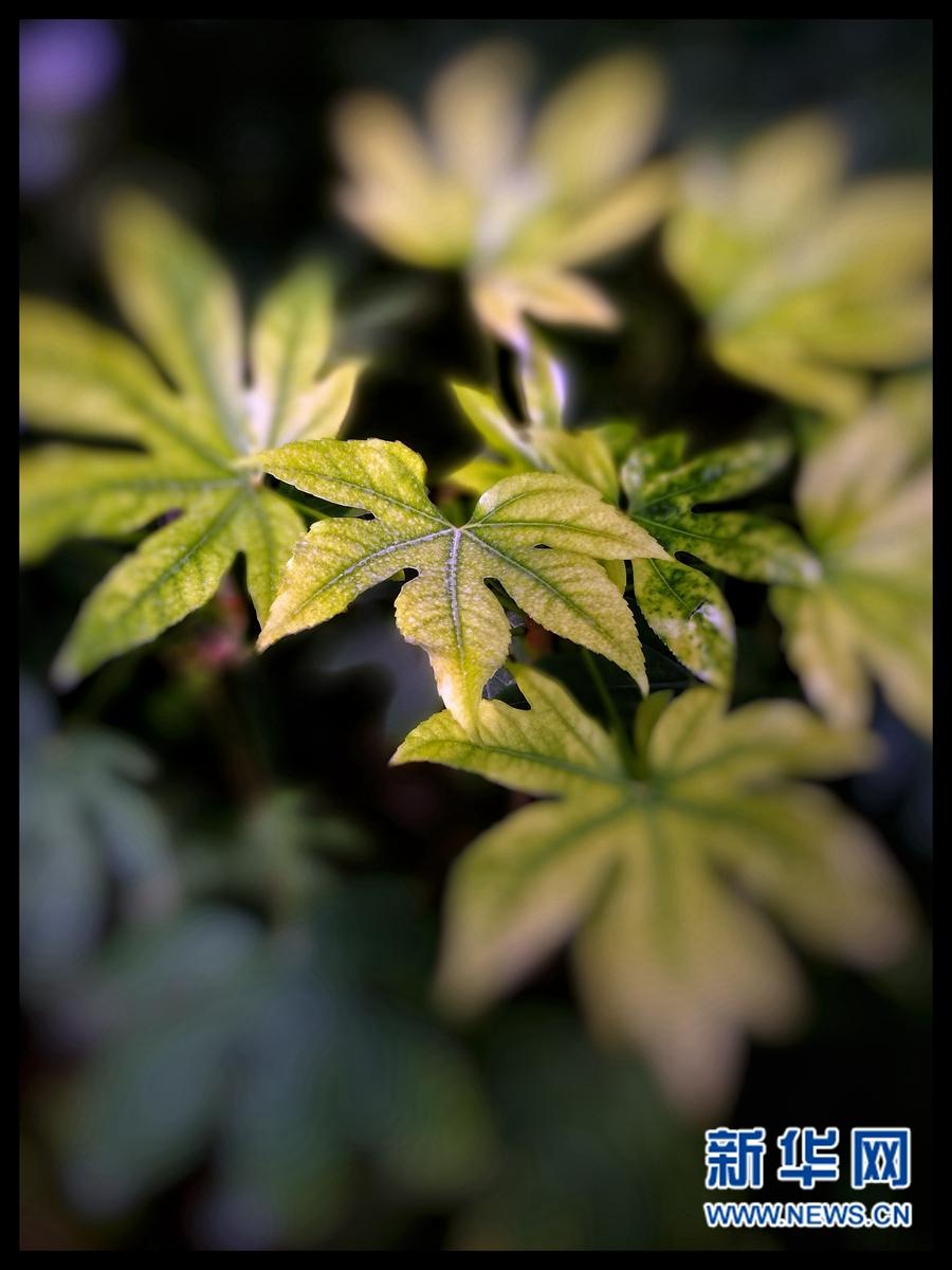 """【春到青海】""""偷""""一抹绿色,化作春的礼物"""