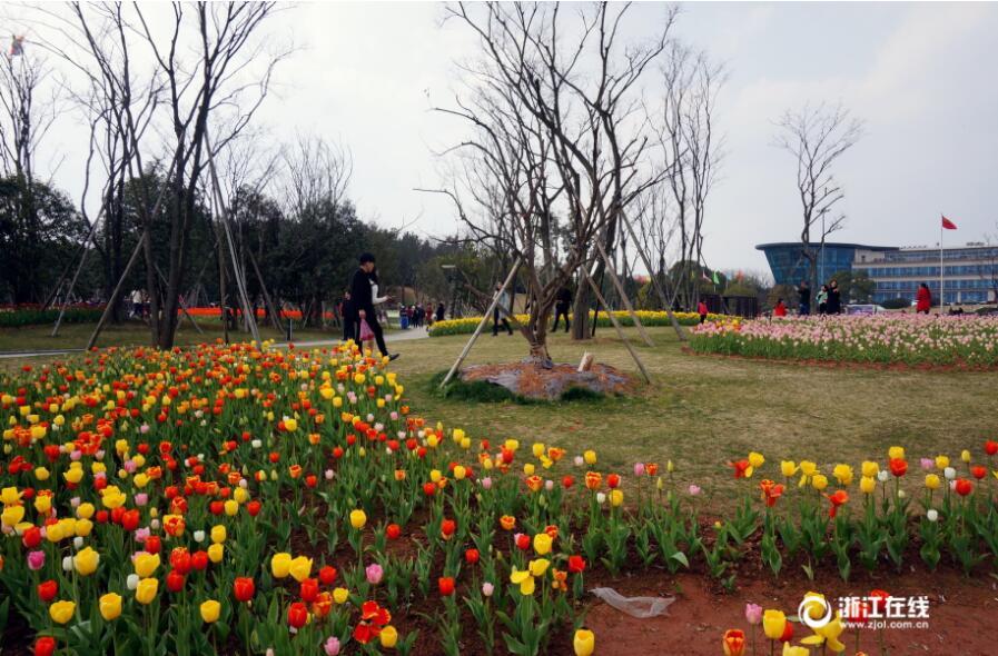 金华:三月花季 金满湖香