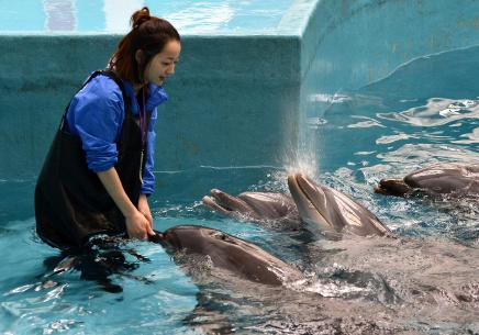"""""""海豚姑娘""""的蓝色追梦之旅"""