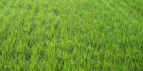 砚山县实现农业生产总产值40.82亿元
