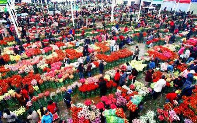 云南:以花为媒融合发展一二三产业