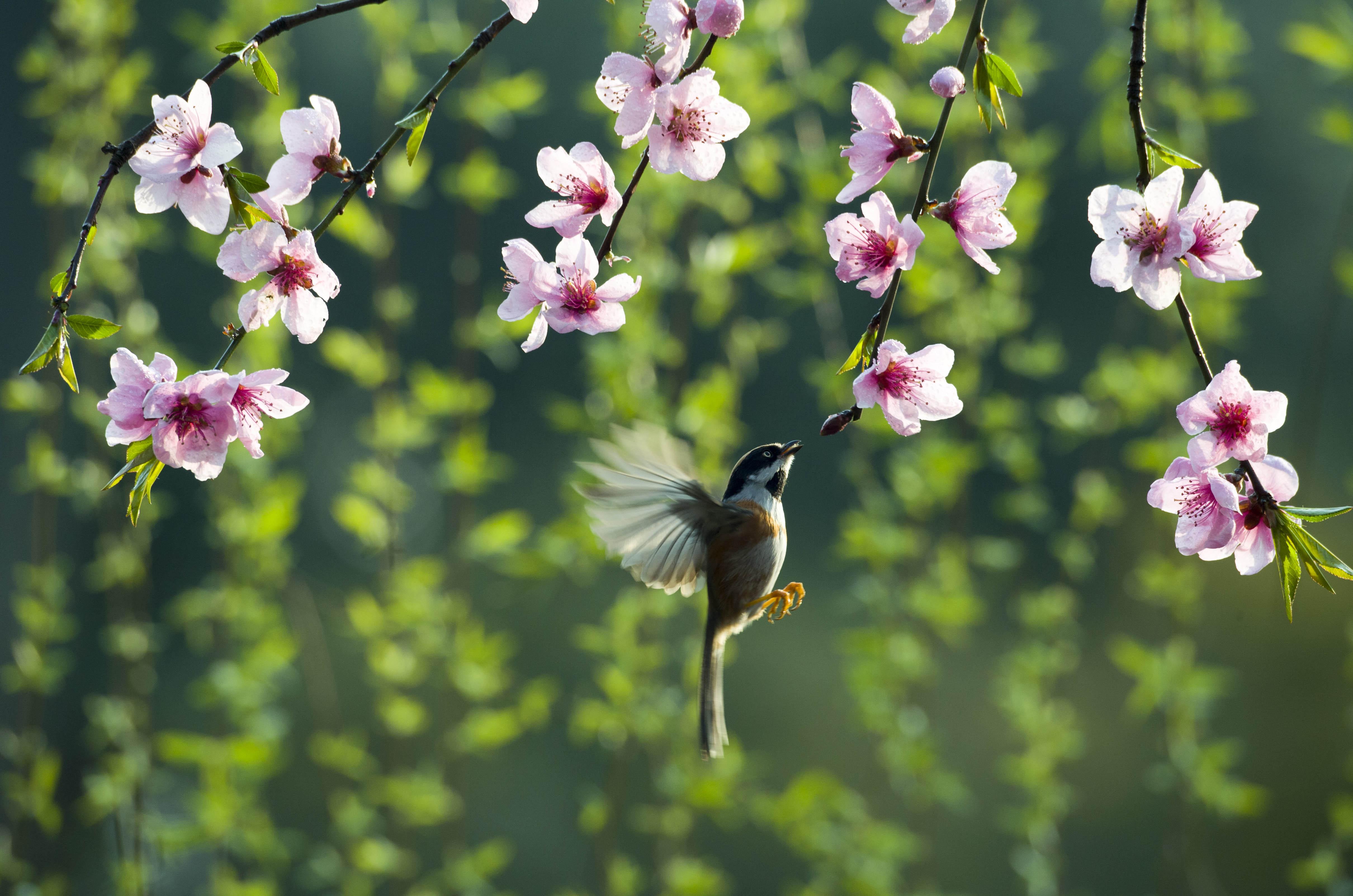 """今日春分 市民走出家门公园里""""寻找春天"""""""