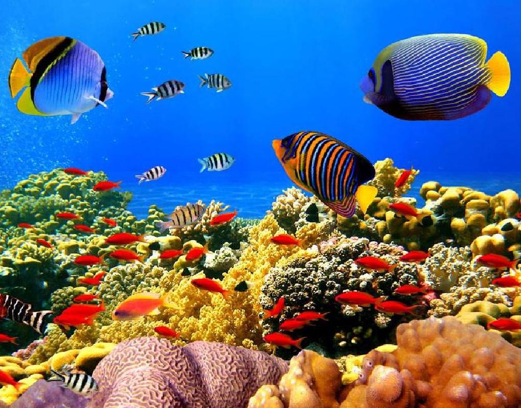 vr带你走进海洋馆 感受海底奇妙世界