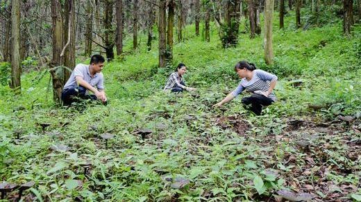 本溪:1.6万农户林业收入超10万元
