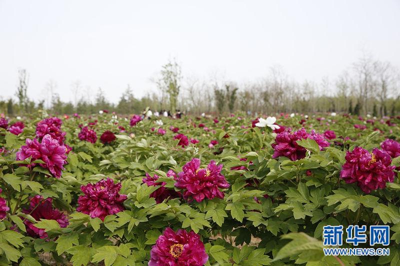 新华网航拍:瞰绿金淮北 赏湖光春色