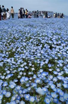 """蓝色""""草海"""""""