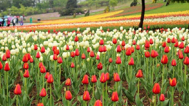 沈阳世博园举办三大花展
