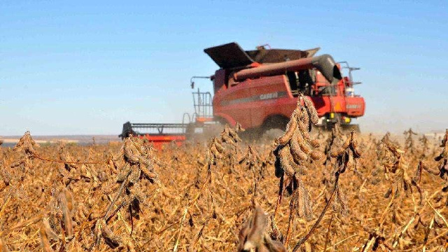 辽宁省开始核查玉米大豆生产者补贴面积