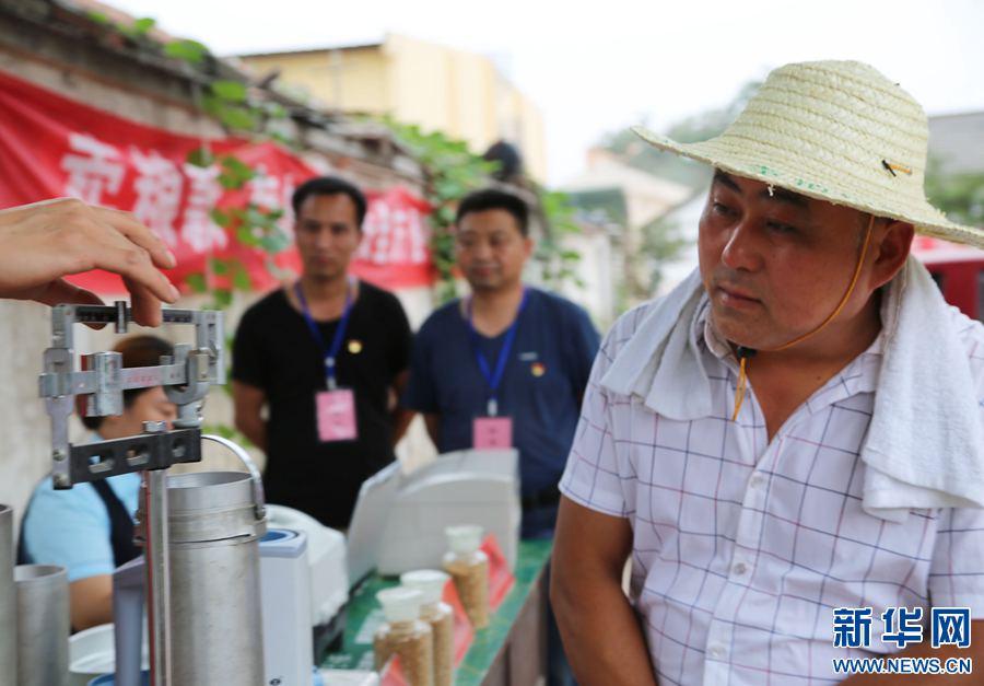 河南宝丰:监督夏粮入库 维护农民卖粮利益