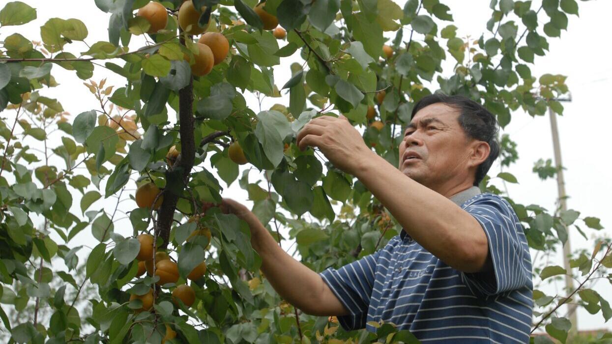 http://www.ln.xinhuanet.com/topic/2016/maofengmei/jujiao/jiuwen/20150313/2691678_c.html