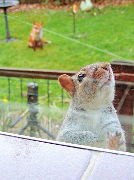 英松鼠敲窗求助 呆萌走红网络转发2万次
