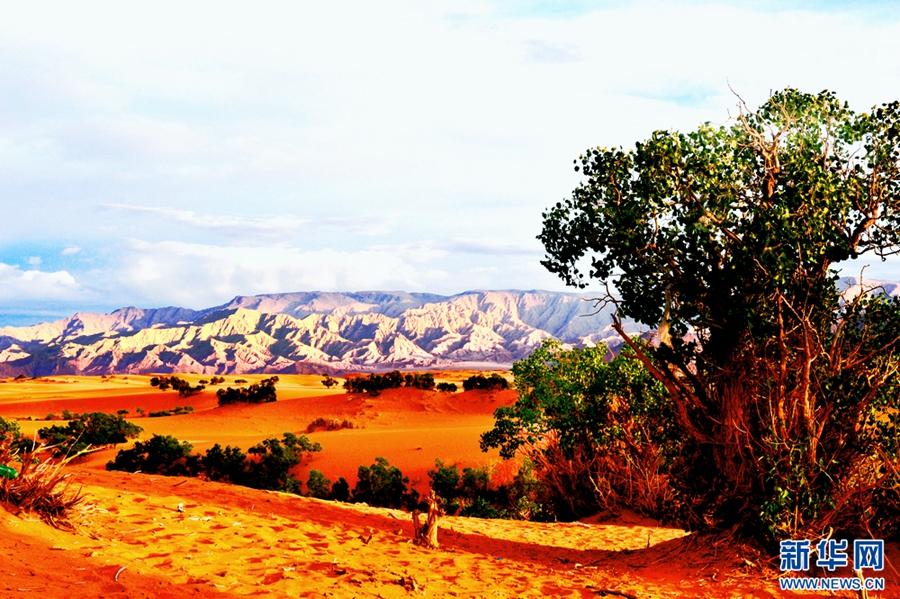 国庆将至 世界最远古沙漠胡杨林秋景美如画