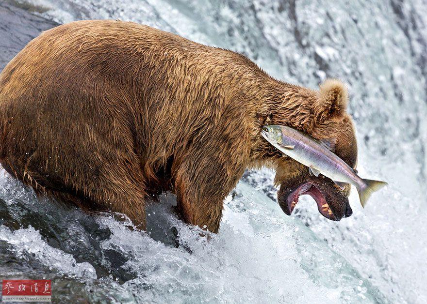 2016野生动物喜剧摄影大赛作品