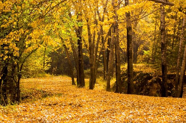 漫步西宁植物园,尽赏深秋美景