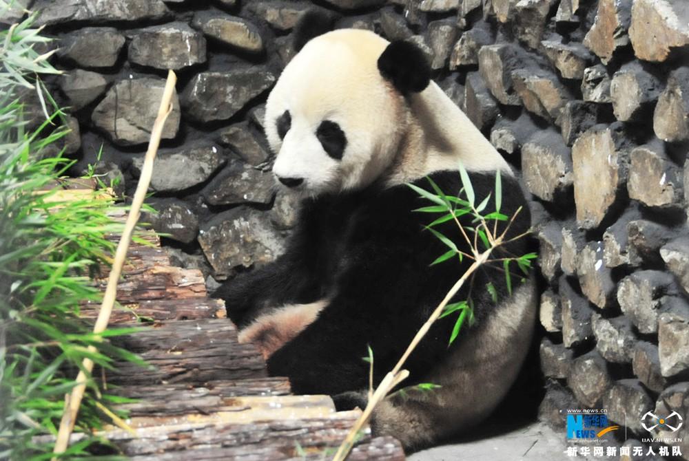 """新华网航拍:探访大熊猫在神农架的""""新家"""""""