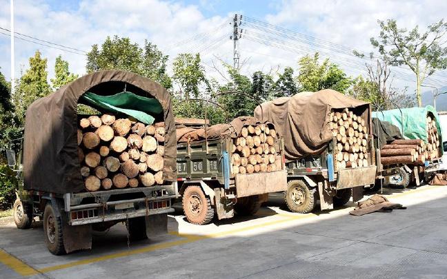 澜沧县一天连续查获5起非法运输木材案