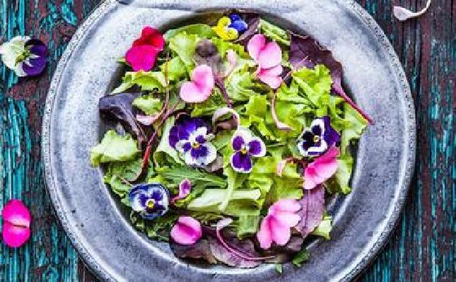 拒绝蔬菜沙拉 时髦大咖都在吃鲜花
