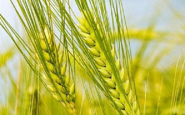 曲靖宣威市全面加快农业现代化进程