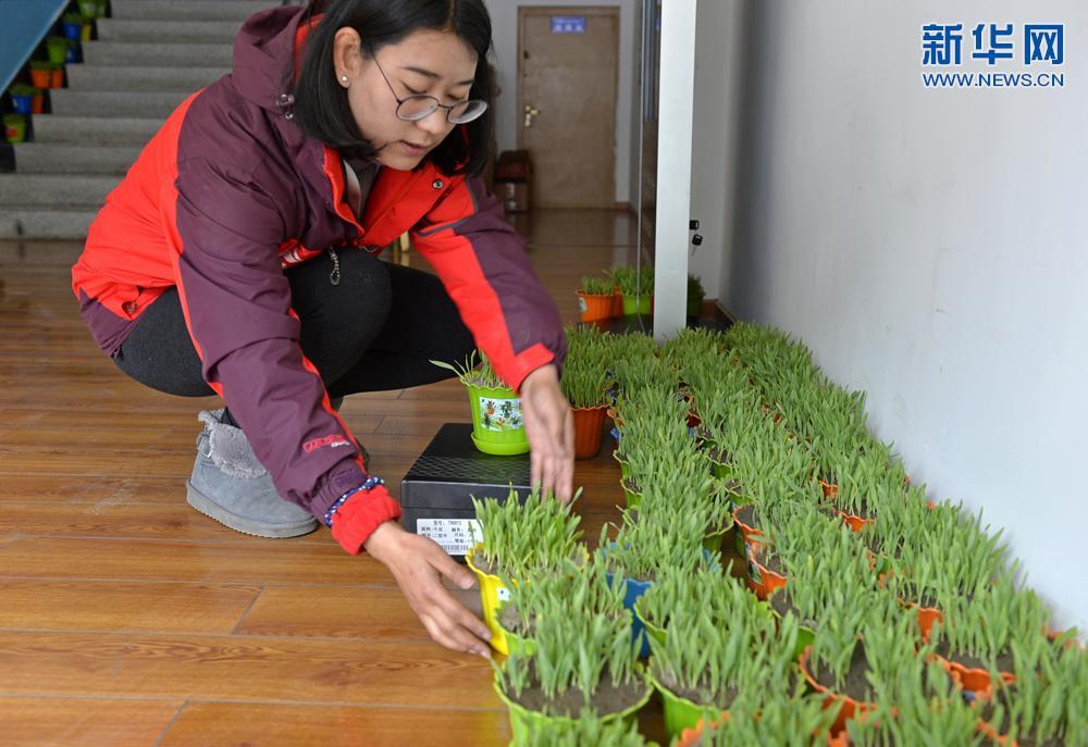 拉萨:电商平台服务藏历新年