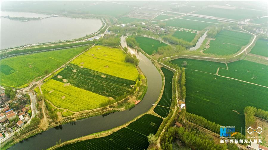 航拍:大运河畔春意浓