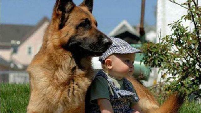 养宠物或可降低婴儿过敏风险