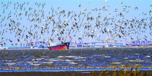 到大辽河入海口拍鸟去
