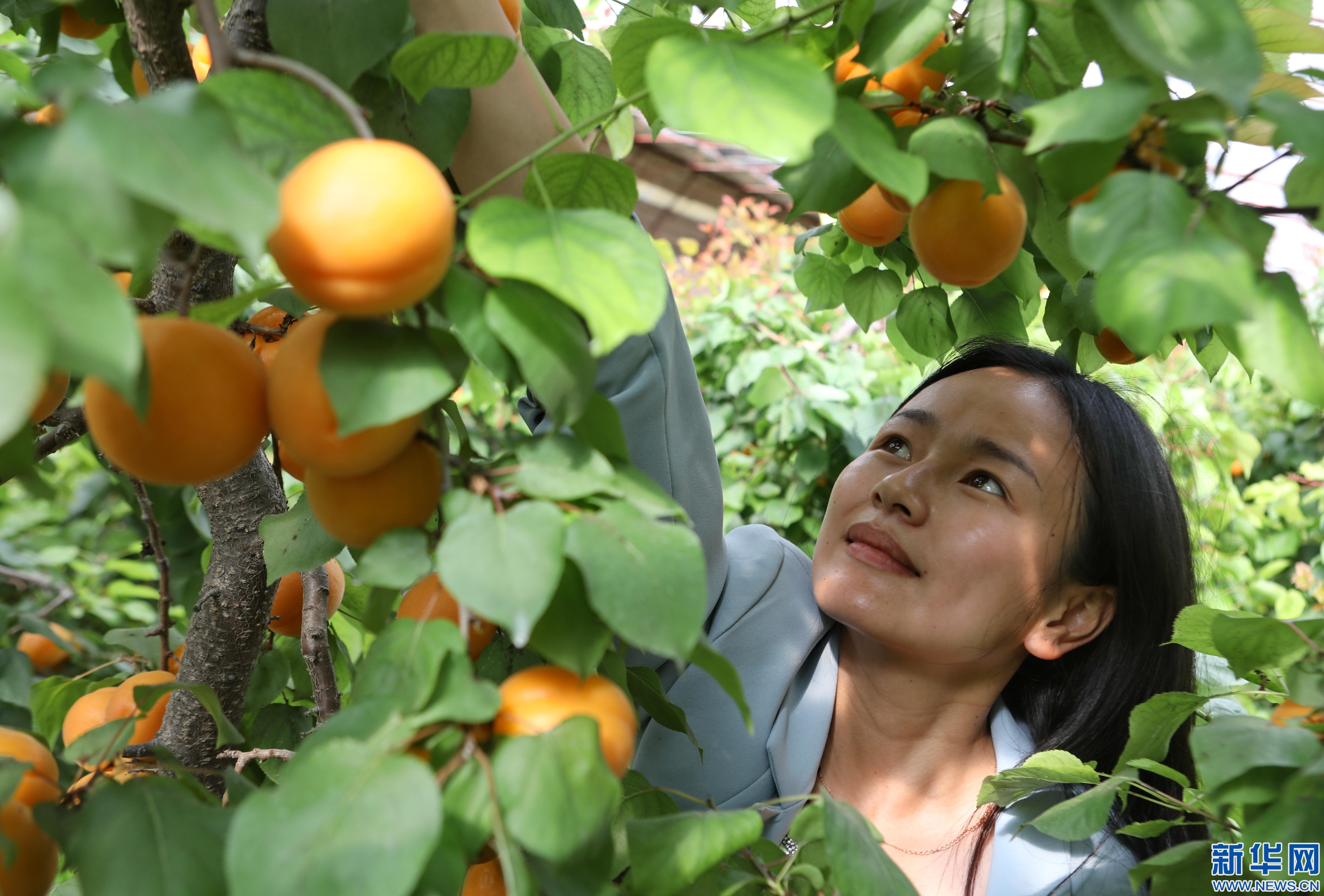 河北宣化发展现代农业助农增收