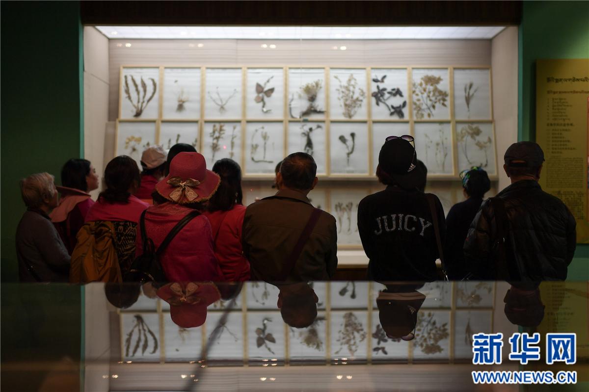 探访中国藏医药文化博物馆