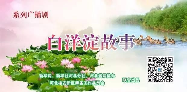 """系列广播剧《白洋淀故事》⑬:白洋淀""""一花、三宝""""为何物"""