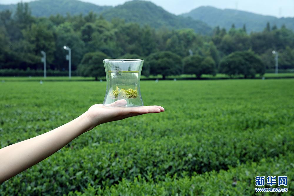 龙井匠人的26道工艺造就茶叶艺术
