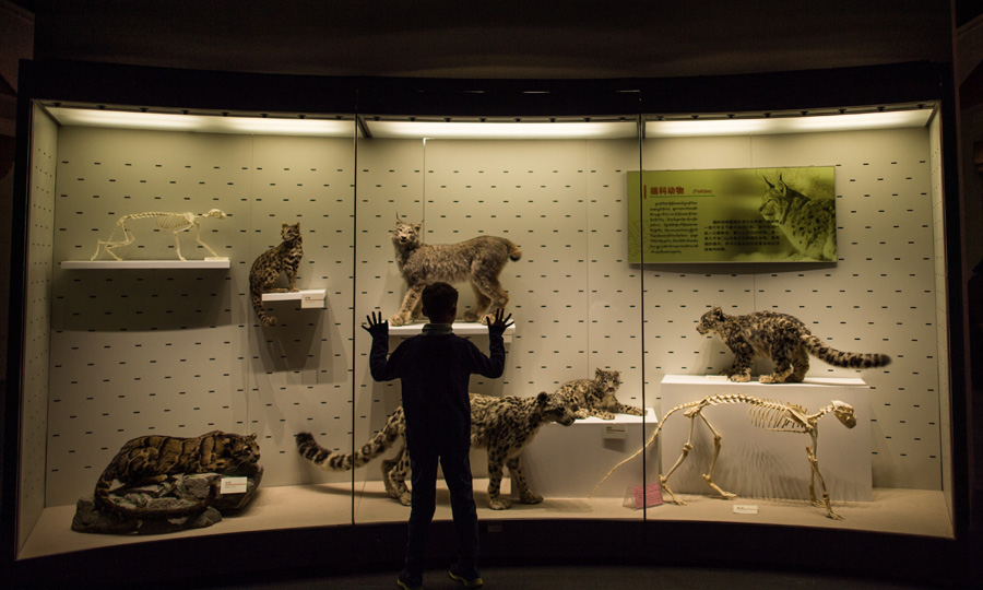 10月3日,一名小朋友在西藏自然科学博物馆内观看青藏高原动物标本.