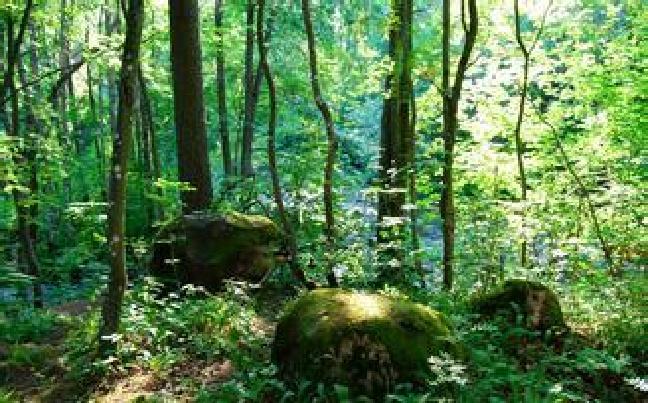 昆明加强林业有害生物防控 灾害测报准确率力争达90%以上