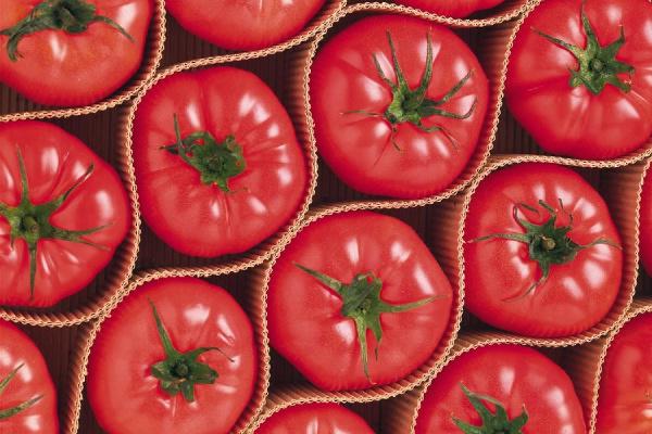 西红柿营养价值及功效 西红柿怎么吃营养?